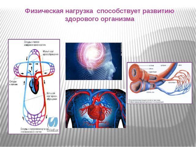 Физическая нагрузка способствует развитию здорового организма