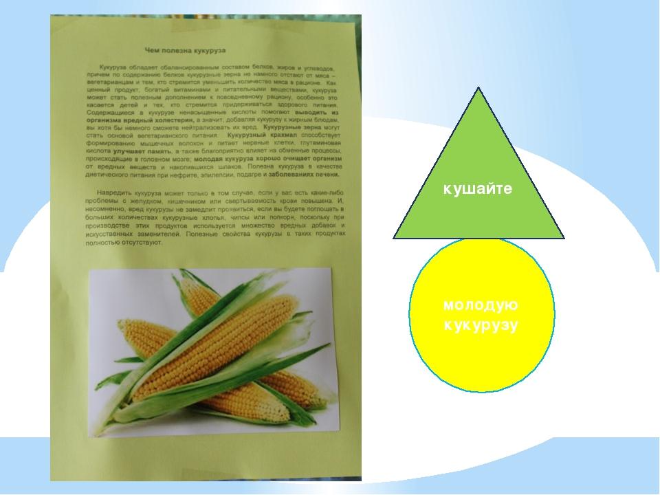 молодую кукурузу кушайте