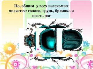 Но, общим у всех насекомых является: голова, грудь, брюшко и шесть ног