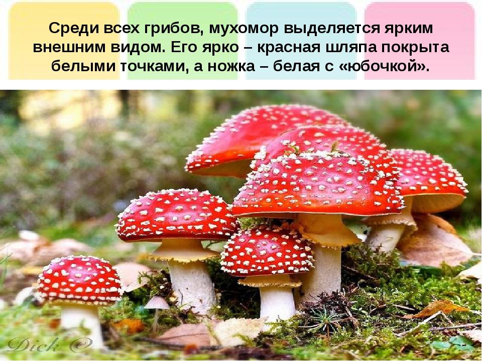 Среди всех грибов, мухомор выделяется ярким внешним видом. Его ярко – красная...