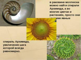 в раковине моллюска можно найти спирали Архимеда, а во многих цветах и растен