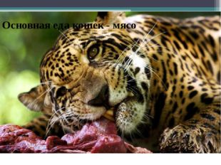 Основная еда кошек - мясо