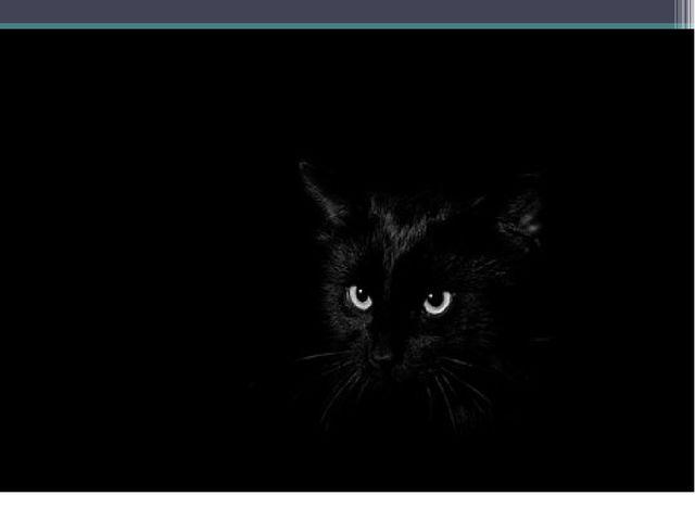 Кошки очень хорошо видят в темноте
