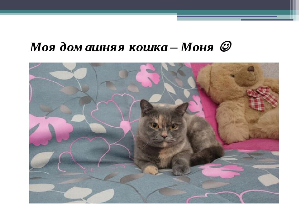 Моя домашняя кошка – Моня 