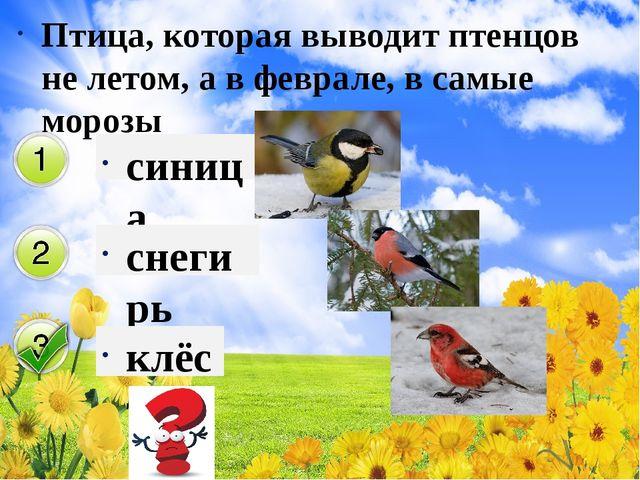 Птица, которая выводит птенцов не летом, а в феврале, в самые морозы синица с...