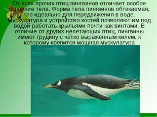 От всех прочих птиц пингвинов отличает особое строение тела. Форма тела пингв