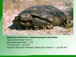 Черепахи относятся к животным-долгожителям. Красноухие живут 30 лет, средизем