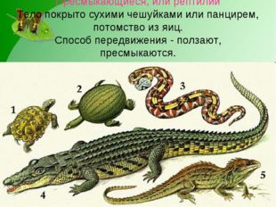 Пресмыкающиеся, или рептилии Тело покрыто сухими чешуйками или панцирем, пото
