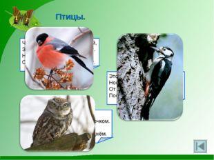 Птицы. Чернокрылый, красногрудый, Здесь зимой найдёт приют. Не боится он прос