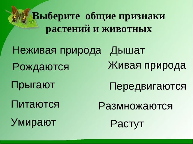 Выберите общие признаки растений и животных Неживая природа Размножаются Жива...