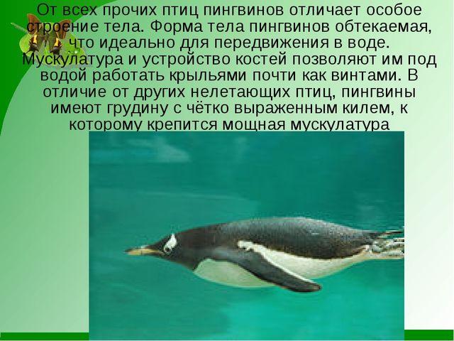 От всех прочих птиц пингвинов отличает особое строение тела. Форма тела пингв...