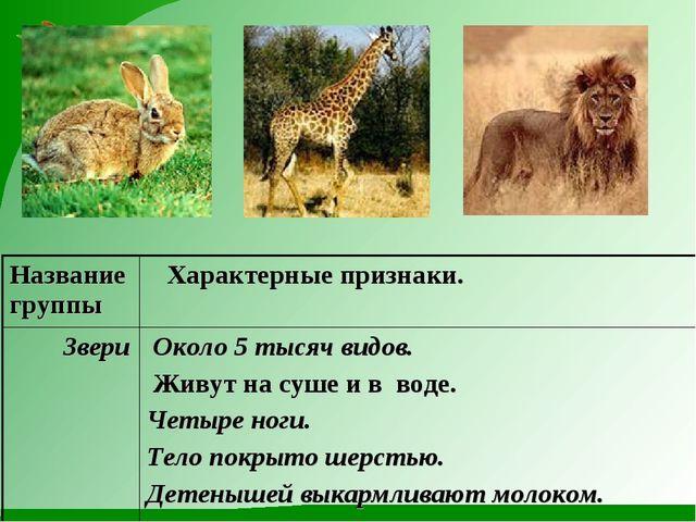 Название группы Характерные признаки. Звери Около 5 тысяч видов. Живут на с...