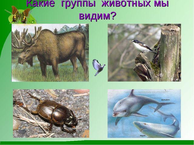 Какие группы животных мы видим?