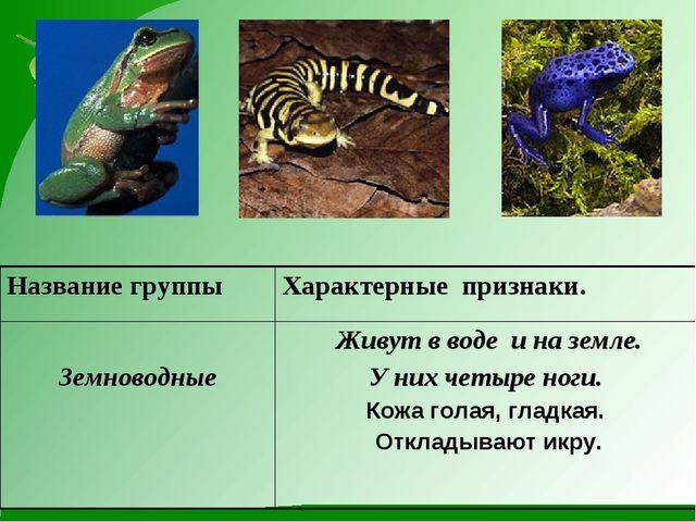 Название группыХарактерные признаки. Земноводные  Живут в воде и на земле....