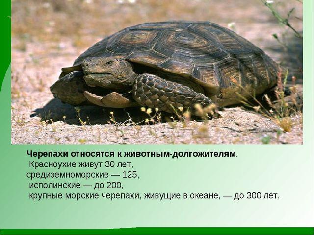 Черепахи относятся к животным-долгожителям. Красноухие живут 30 лет, средизем...