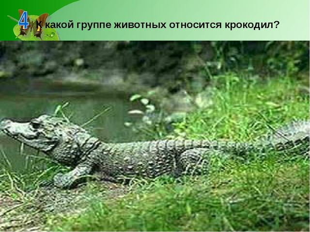 К какой группе животных относится крокодил?
