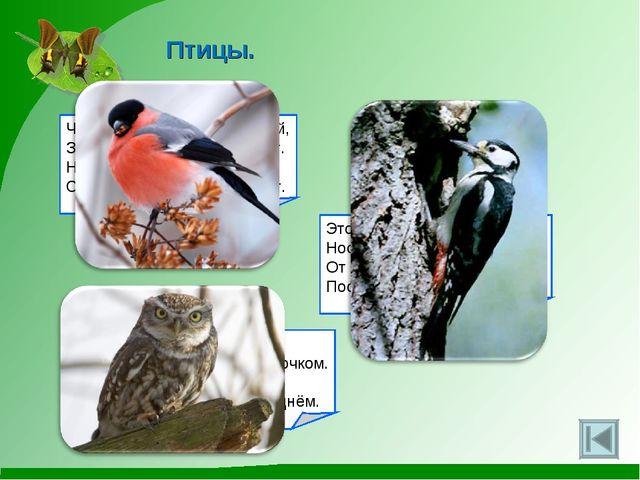 Птицы. Чернокрылый, красногрудый, Здесь зимой найдёт приют. Не боится он прос...