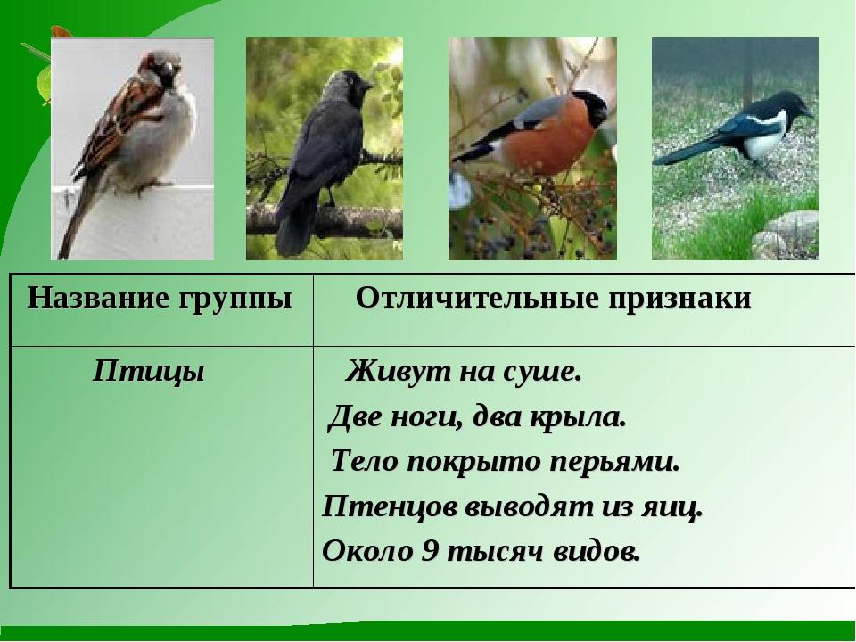 Название группы Отличительные признаки Птицы Живут на суше. Две ноги, два...
