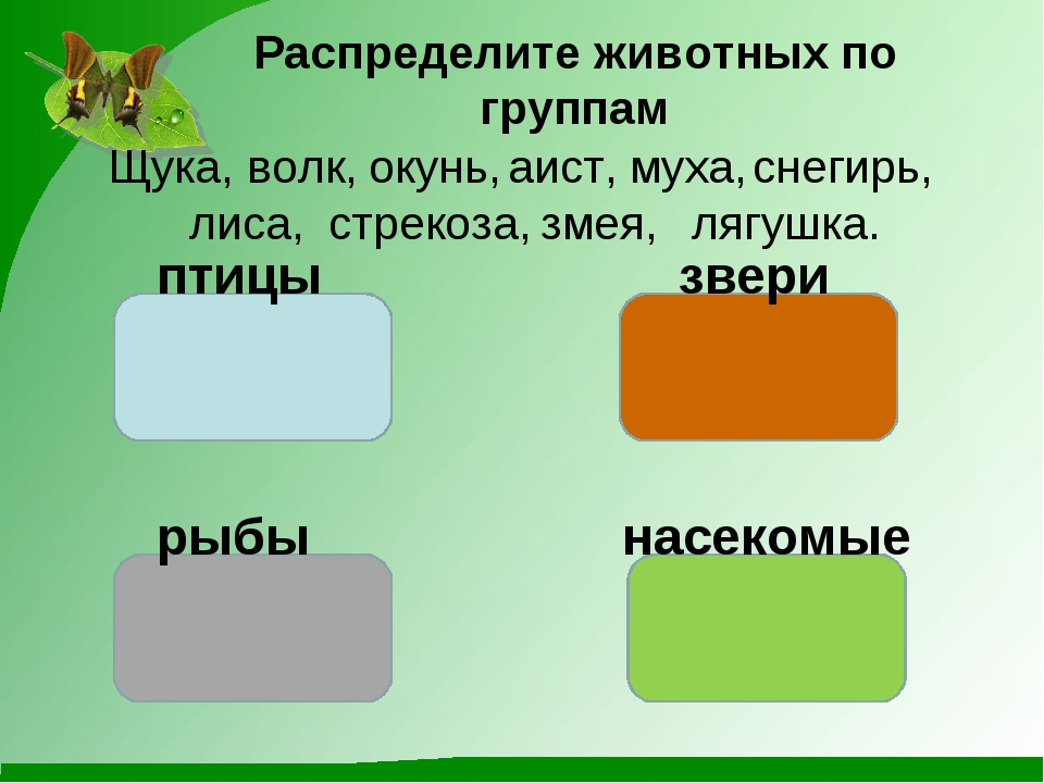 Распределите животных по группам Щука, снегирь, волк, окунь, аист, муха, лиса...