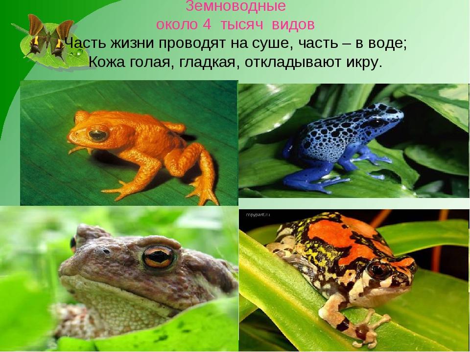 Земноводные около 4 тысяч видов Часть жизни проводят на суше, часть – в воде...