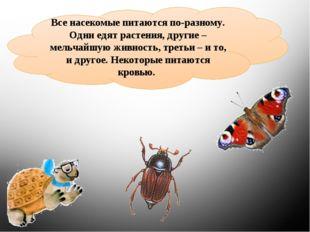 Все насекомые питаются по-разному. Одни едят растения, другие – мельчайшую жи