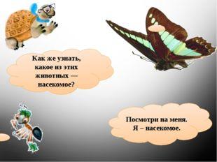 Какже узнать, какое изэтих животных— насекомое? Посмотри на меня. Я – насе