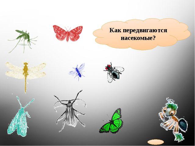 Как передвигаются насекомые?
