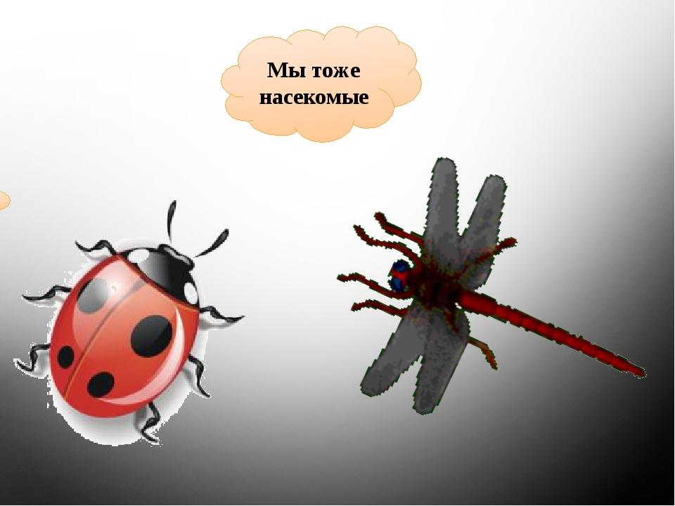 Мы тоже насекомые