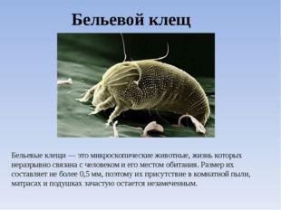 Бельевой клещ Бельевые клещи — это микроскопические животные, жизнь которых н