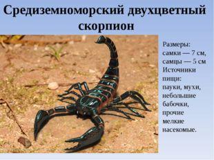 Средиземноморский двухцветный скорпион Размеры: самки — 7 см, самцы — 5 см Ис