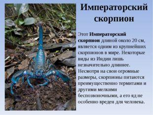 Императорский скорпион ЭтотИмператорский скорпиондлиной около 20 см, являет