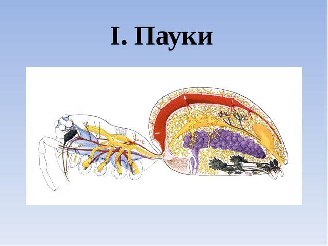 I. Пауки