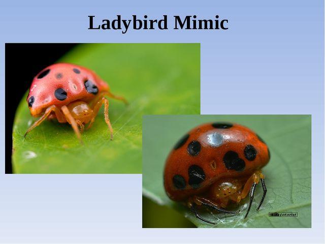 Ladybird Mimic