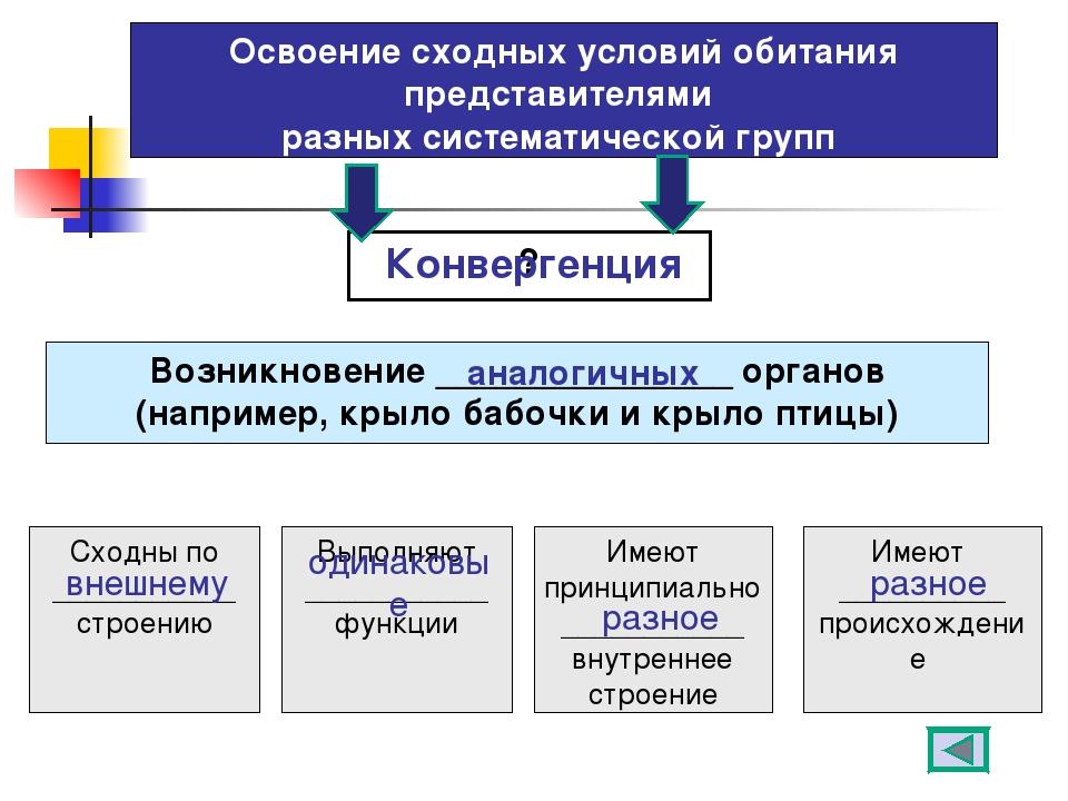Освоение сходных условий обитания представителями разных систематической груп...