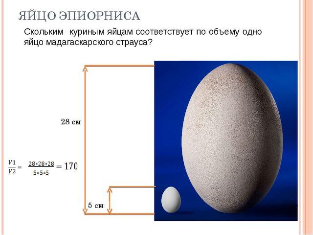 ЯЙЦО ЭПИОРНИСА 5 см 28 см Скольким куриным яйцам соответствует по объему одно...
