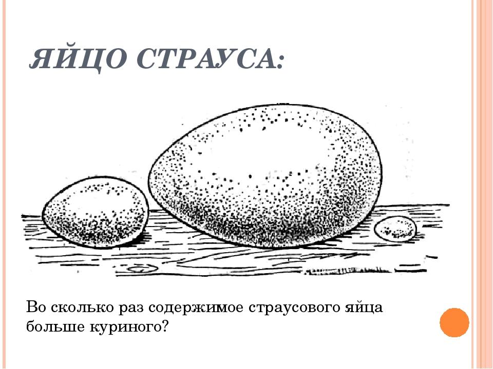 ЯЙЦО СТРАУСА: Во сколько раз содержимое страусового яйца больше куриного?