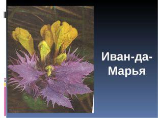Иван-да- Марья