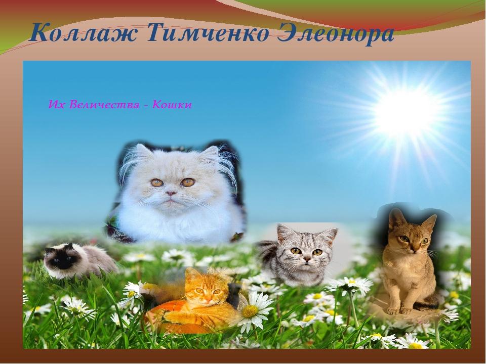 Коллаж Тимченко Элеонора