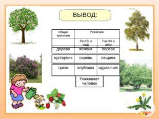 ВЫВОД: деревояблоняберёза траваклубникаодуванчик кустарниксиреньлещина
