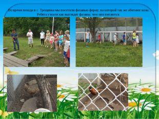 Во время похода в с. Трещевка мы посетили фазанью ферму, на которой так же об