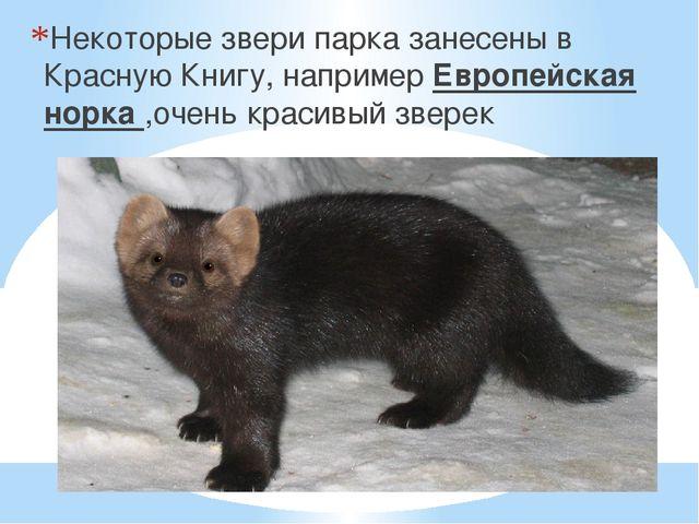Некоторые звери парка занесены в Красную Книгу, например Европейская норка ,...