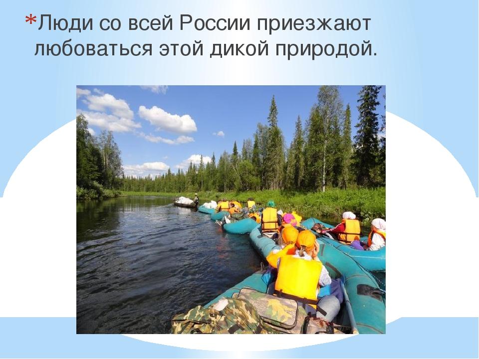 Люди со всей России приезжают любоваться этой дикой природой.