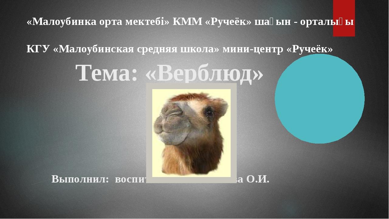 Тема: «Верблюд» Выполнил: воспитатель Феклистова О.И. «Малоубинка орта мекте...
