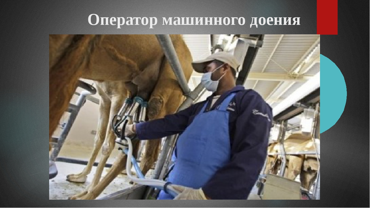 Оператор машинного доения