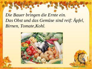 Die Bauer bringen die Ernte ein. Das Obst und das Gemüse sind reif: Äpfel, Bi