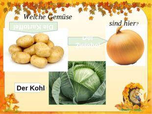 Welche Gemüse sind hier? Der Kohl Der Zwiebel Die Kartoffel