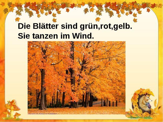 Die Blätter sind grün,rot,gelb. Sie tanzen im Wind.