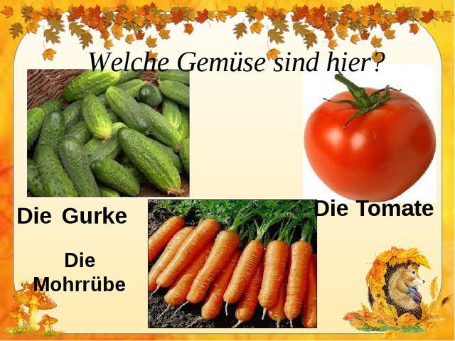 Welche Gemüse sind hier? Die Gurke Die Tomate Die Mohrrübe