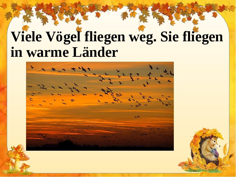 Viele Vögel fliegen weg. Sie fliegen in warme Länder