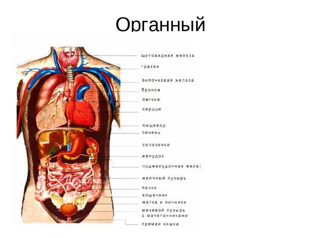 Органный